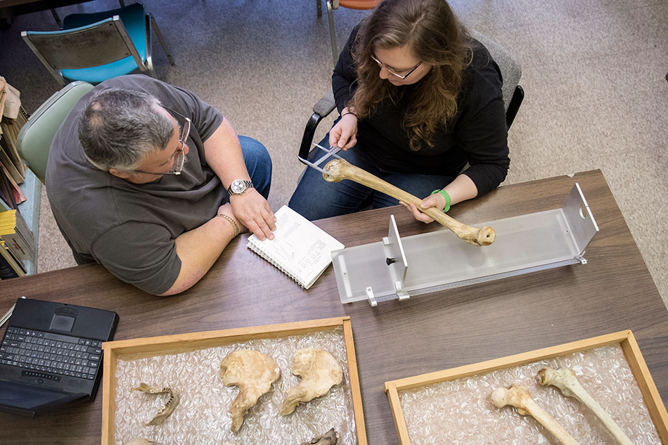 Photo of man and woman sitting examining bones for forensic archaeology