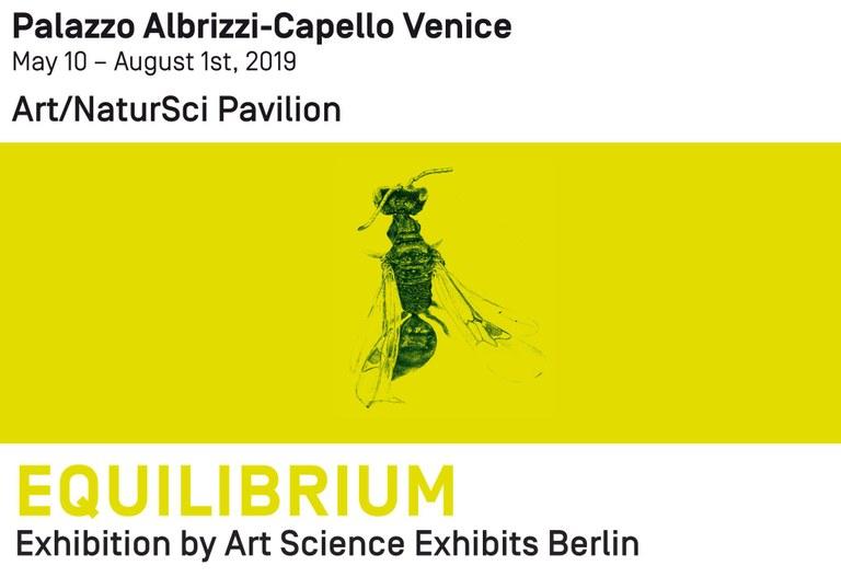 Equilibrium Exhibition