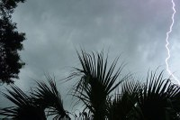 Biology Prof. Steve Yanoviak studies lightning strikes on trees in Panama