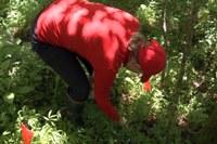 Biology researchers study invasive species of grass