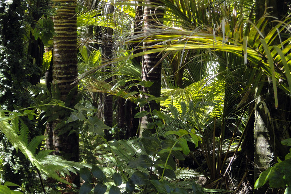 Lecturers to discuss Amazon rainforests, Bronze Age