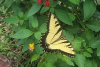 Back to nature: Spend holiday weekend counting, learning about butterflies
