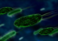 Antibiotic resistant bacteria in local water sources