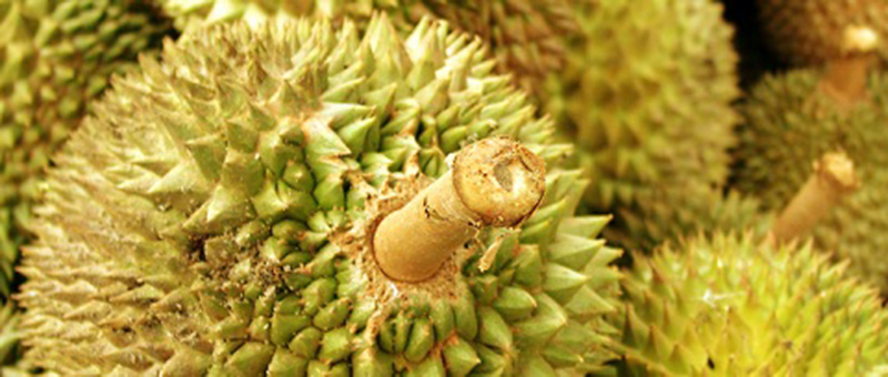 picture of green spiky fruit