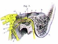 Cranial_nerves_1