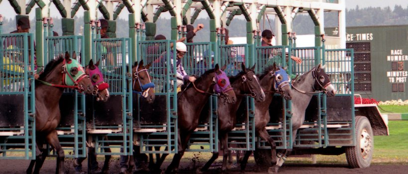 horses released at a racetrack gate