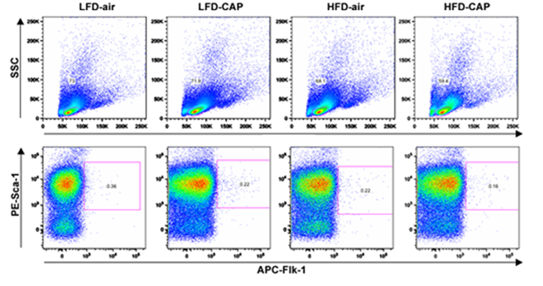 Flow cytometric dot plots circulating EPCs