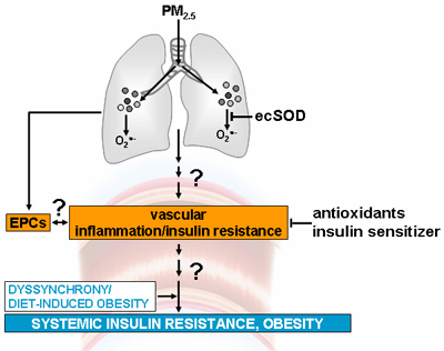 systemic insulin resistance graph
