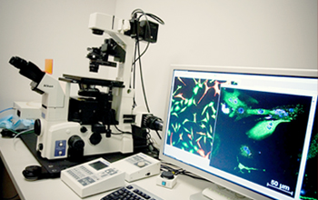 Photo of confocal imaging laboratory