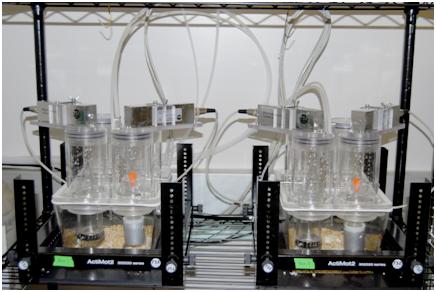 TSE PhenoMaster/LabMaster Metabolic Chamber System