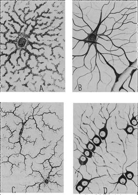 pics of neurons