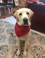 Jake the LALS Therapy Dog