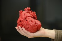 hand holding red 3d heart model