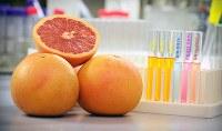 Study: Grapefruit a 'secret weapon'
