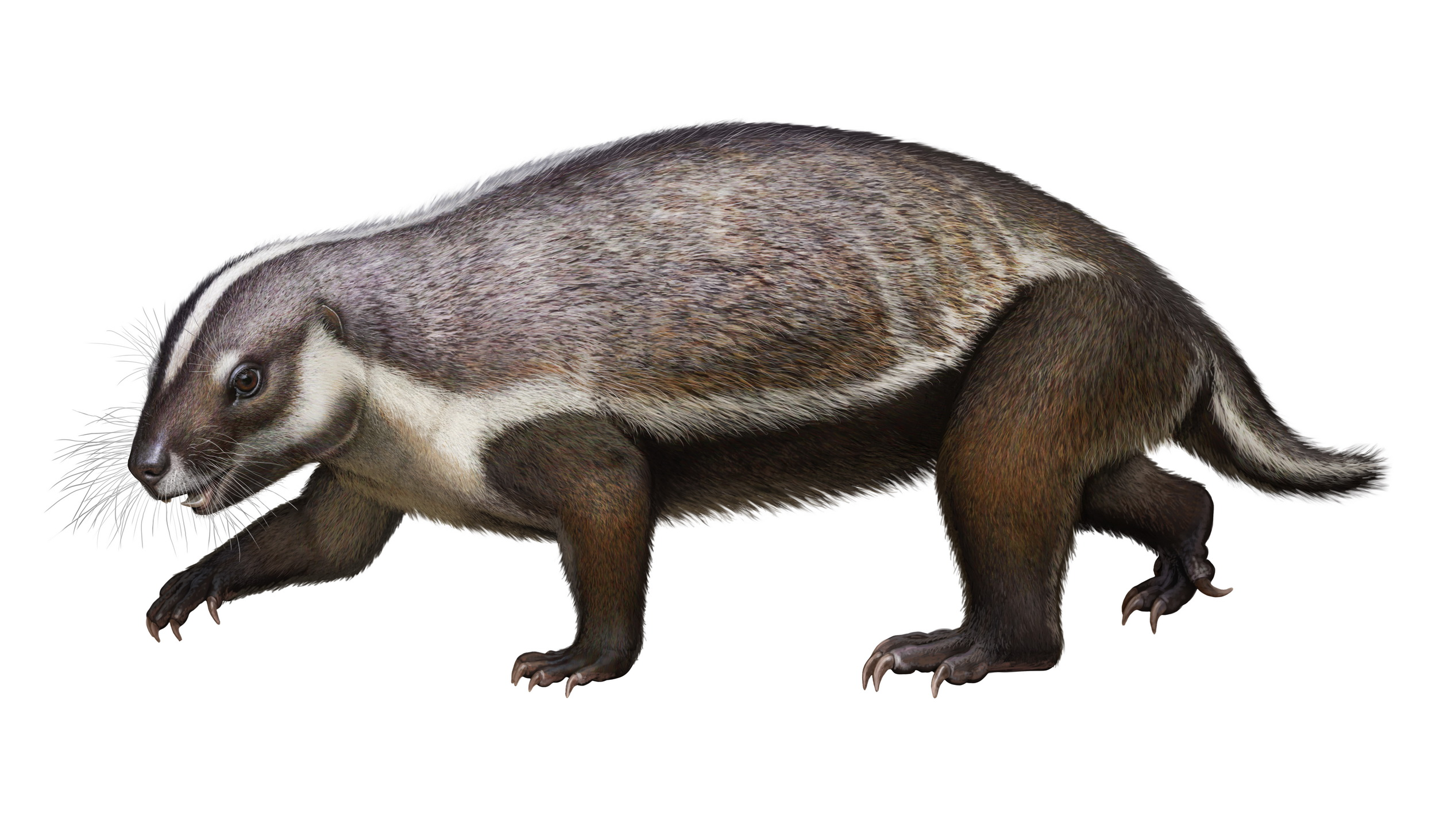 Bizarre 66 million-year-old fossil from Madagascar provides clues on early mammals
