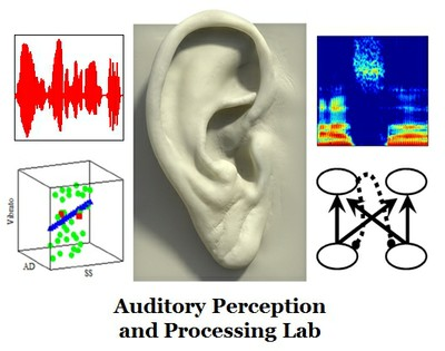 Auditory Perception and Processing Lab logo