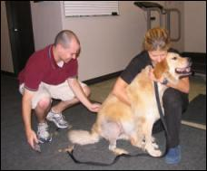 Dog being prepped for motion capture for gait analysis