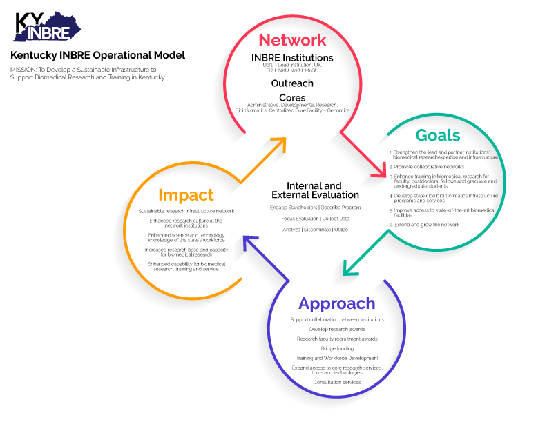 The Overall Operational Model illustrates schematically how the KY INBRE network, with its institutions and cores, is addressing its proposed goals to make a significant impact in the training of the current and future biomedical workforce of our state.
