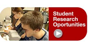 Undergraduate Student Opportunities