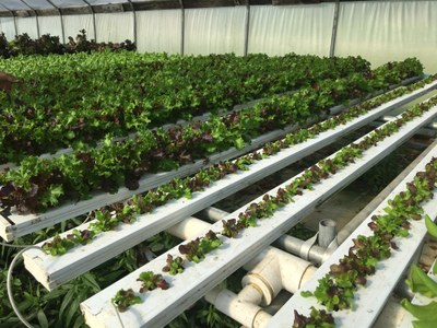 Image 1 of Jackson's greenhouse