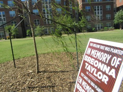 Breonna Taylor memorial willow planted 2020-09-30