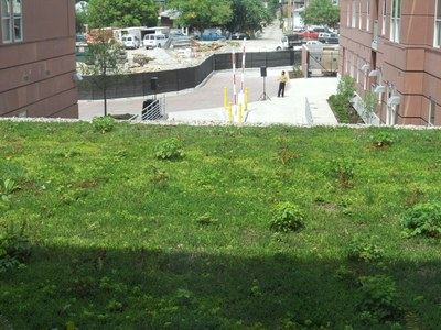 Cardinal Towne Green Roof
