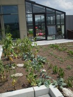 Vegetable Garden atop Early Learning Campus at Family Scholar House
