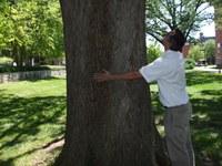 Love Louisville Trees!