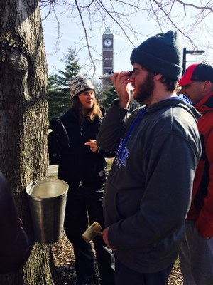 Maple Tapping - March 2016