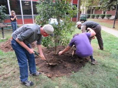UofL Arbor Day Tree Planting 2020