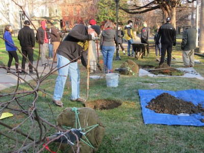 UofL students, faculty & staff participated in the Old Louisville Tree Planting 12-5-20