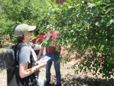 Dr. Angela Storey gathering data at 2021 Serviceberry Foraging Workshop
