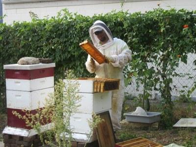 UofL's Justin Mog is a beekeeper