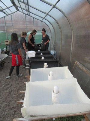 Aquaponics System at Garden Commons Greenhouse
