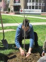 UofL Arbor Day 2017 Tree Planting