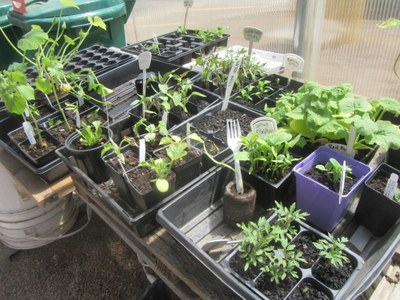Seed Starting at Garden Commons 2018