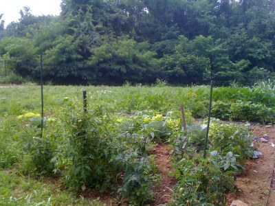 Shelby Campus CPM Birthday Garden (July 2011)