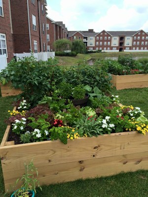 The Province Community Garden