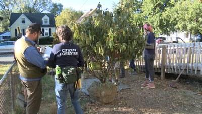 Green Heart Tree Planting