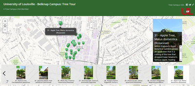 Virtual Belknap Tree Tour