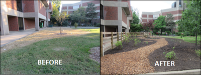 BIOL Native Plant Garden Before+After (Spring 2016)